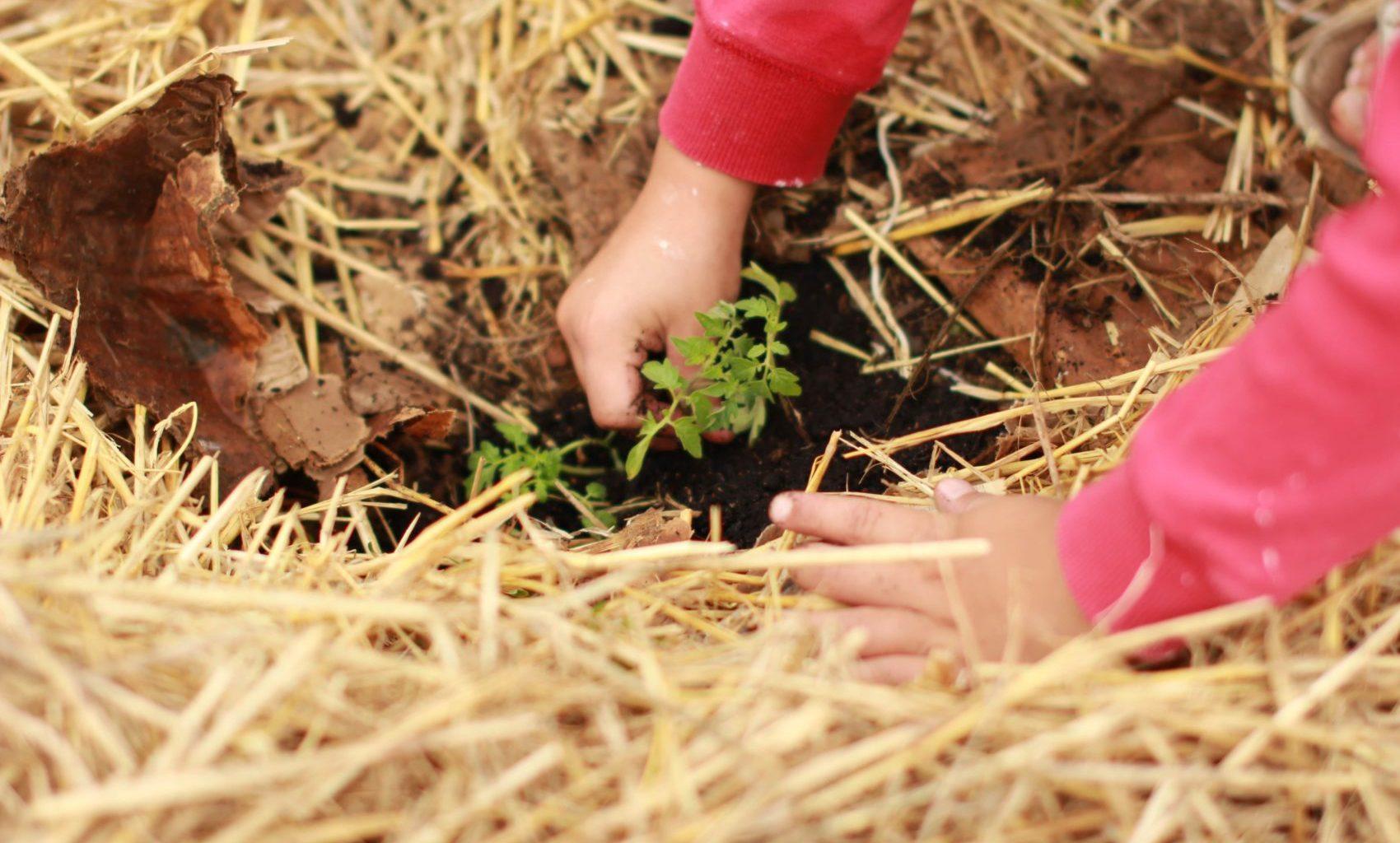 Plant a Rosemary Bush