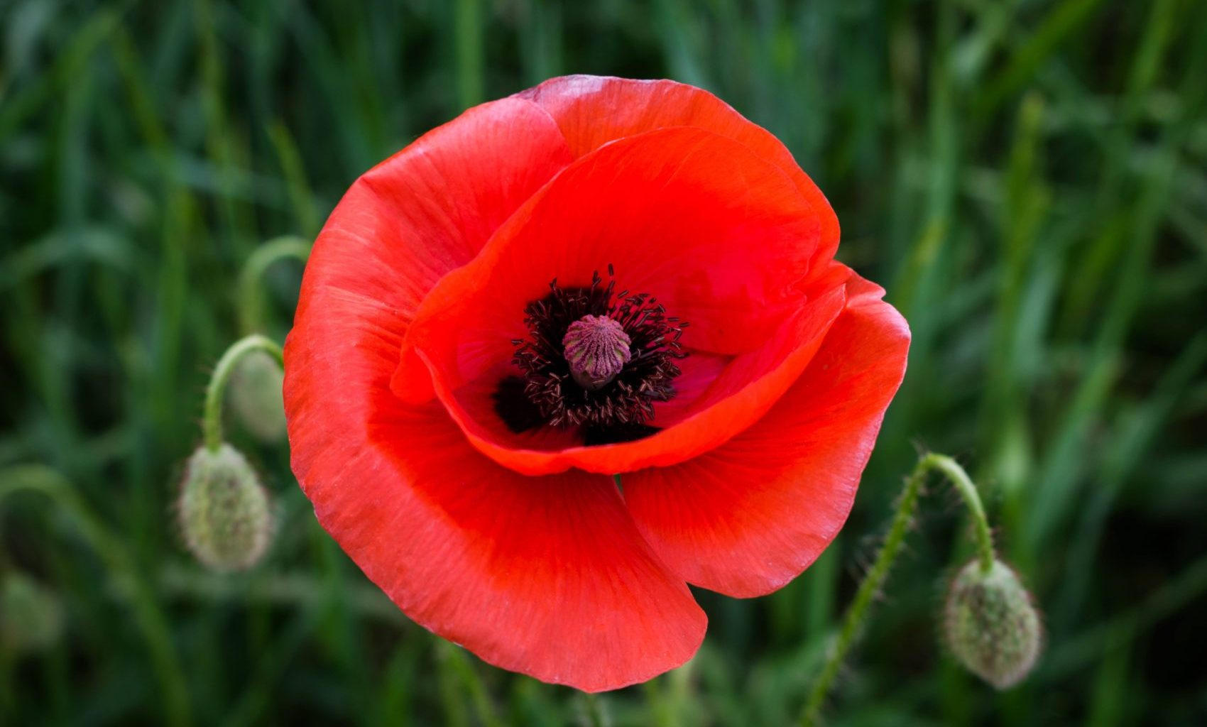 Remembering ANZAC Day with Children